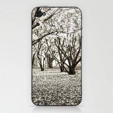 Magnolias in Black & White iPhone & iPod Skin