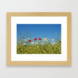 Flowers on a canola field Framed Art Print