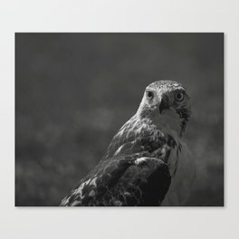Birds Eye View #society6 #art #prints // Black And White Animal Photography Canvas Print