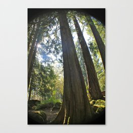 Tree Tree Tree Canvas Print