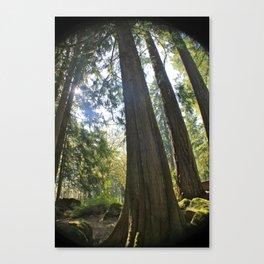 Tree Tree Tree Canvas Print