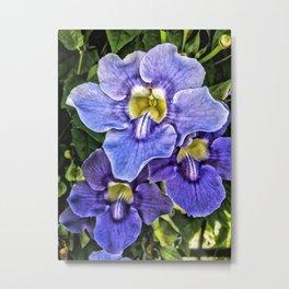 Clematis Flowers, Washington Oaks Garden State Park, Florida Metal Print