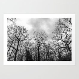 Coven of trees Art Print