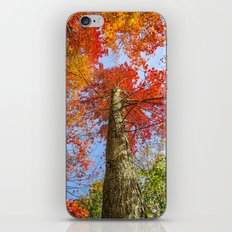 The Colors of Fall iPhone & iPod Skin