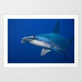Hammerhead Shark- Here is Looking at You Art Print