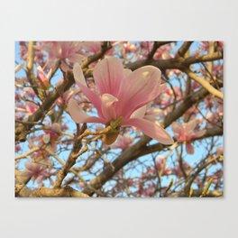 Magnolia Beauty Canvas Print