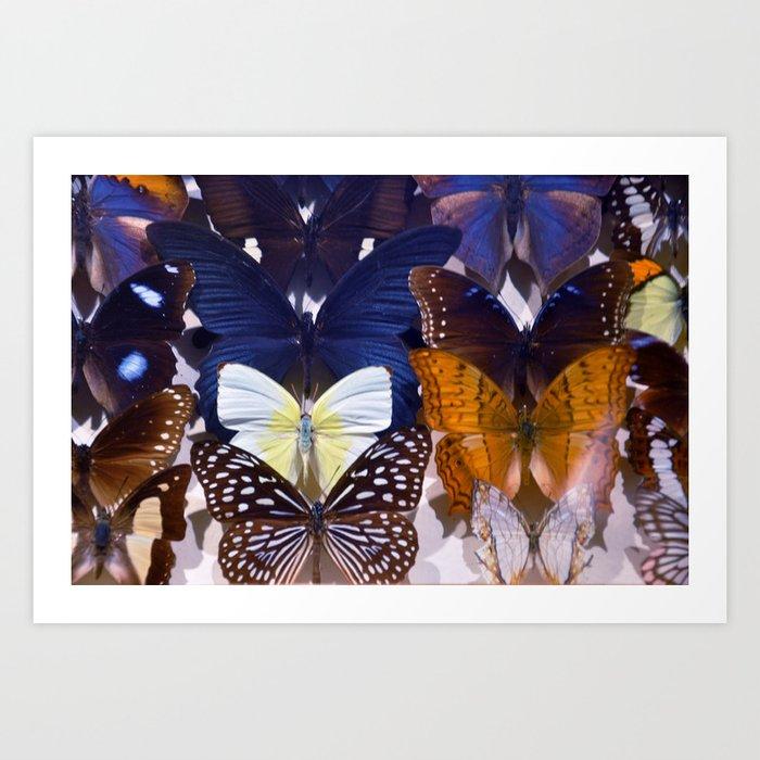Farfalle II Art Print