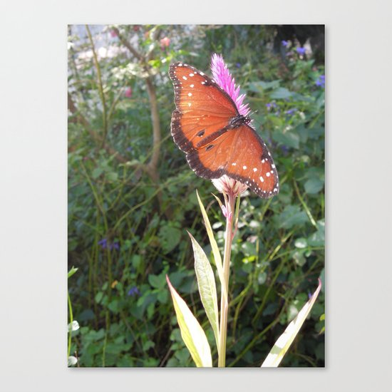 Spread My Wings Canvas Print