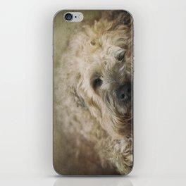 Wheaten Terrier - Let Sleeping Dogs Lie iPhone Skin