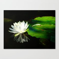 White lily flower reflection Canvas Print