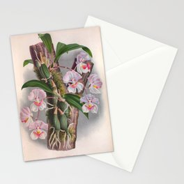Aganisia Cyanea Little Pink Orchids Stationery Cards