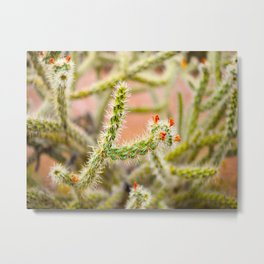 Tiny Baby Cactus With Red Flowers Metal Print
