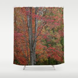 Fall Tree - Red - Square Shower Curtain