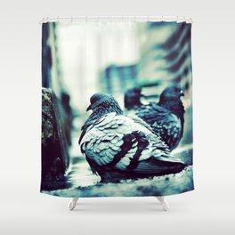 Pidgeons Of 6th Street Shower Curtain