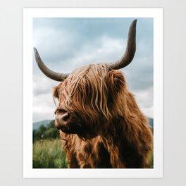 Scottish Highland Cattle - Animal Photography Art Print