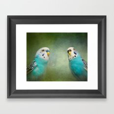 The Budgie Collection - Budgie Pair Framed Art Print