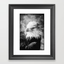 American Bald Eagle Framed Art Print