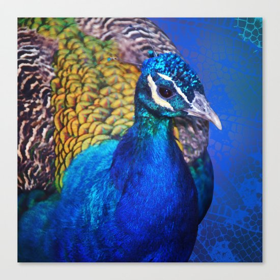 The blue peacock Canvas Print
