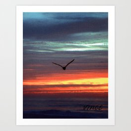 Black Gull by nite Art Print