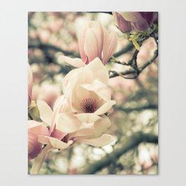 Magnolia Tree Bloom.  Flower Photography Canvas Print
