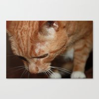 tigger Canvas Prints featuring Tigger from Above by Erin Stevens