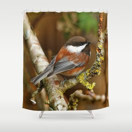 Chestnut-Backed Chickadee in the Cherry Tree Shower Curtain