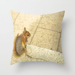 Squirrelly  Sightings Throw Pillow