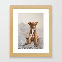 Fawn Colored Puppy on Bed Framed Art Print
