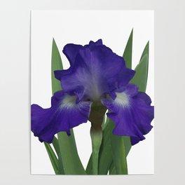 Stellar Lights, Deep blue-violet Iris Poster