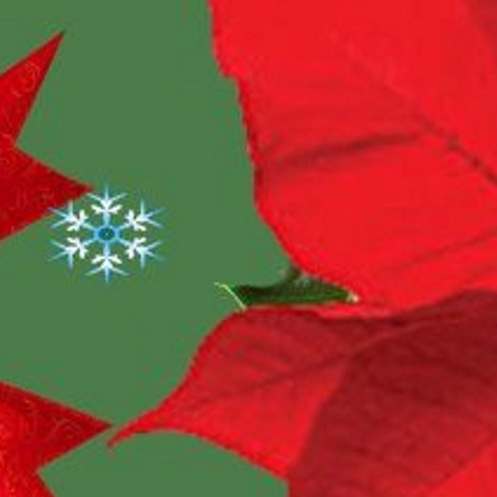 SNOW FLAKES & RED CHRISTMAS POINSETTIA HOLLY BERRIES ART Leggings