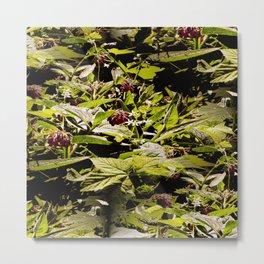 Wild Comfrey & Blackberries.... Metal Print