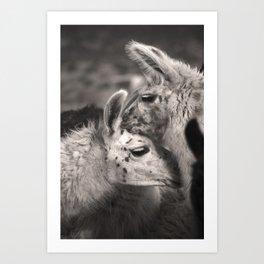 Llama Hugs Art Print