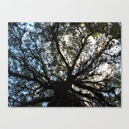 Speading Oak Canvas Print