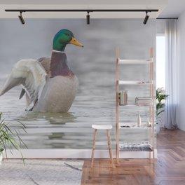 Wild duck flapping wings, mallard male (Anas platyrhynchos) Wall Mural