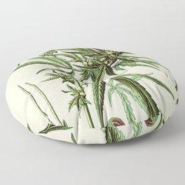 Cannabis Sativa - Vintage botanical illustration Floor Pillow