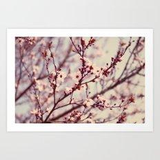 lovely spring blossoms Art Print