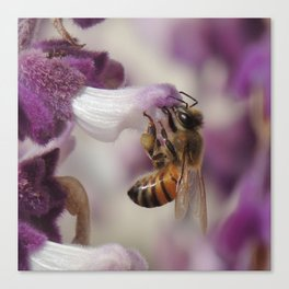 Worker Bee on Mexican Sage Canvas Print