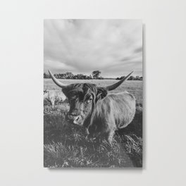 Black and White Highland Cow Metal Print