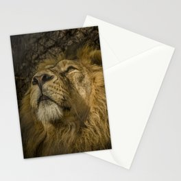 Caught My Eye Stationery Cards