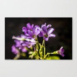 Springtime Blooms Canvas Print