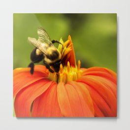 Mexican Sunflower Bumblebee Metal Print