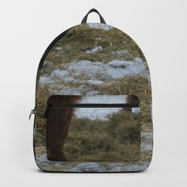 Cat with Scottish Hghland cattle Backpack