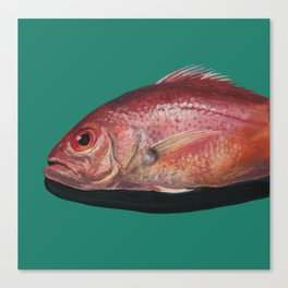 Fish - Red Snapper  Canvas Print