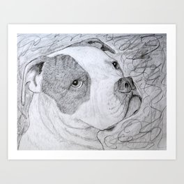 American Bulldog Portrait Drawing Art Print