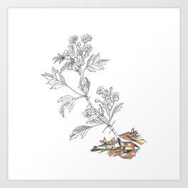 Agrion Art Print