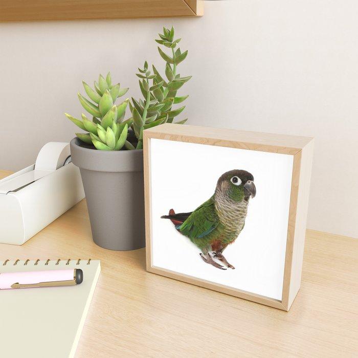 Zeph - Green Cheek Conure Framed Mini Art Print