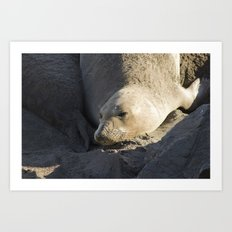 Elephant Seal: Contentment Art Print