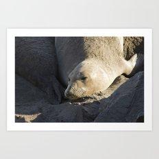 Elephant Seal: Contentment Art Print