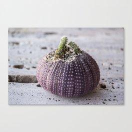 Cactus Planter in sea shell of purple sea urchin Canvas Print
