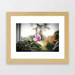Ciclamino Framed Art Print